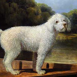 White Poodle in a Punt cross stitch